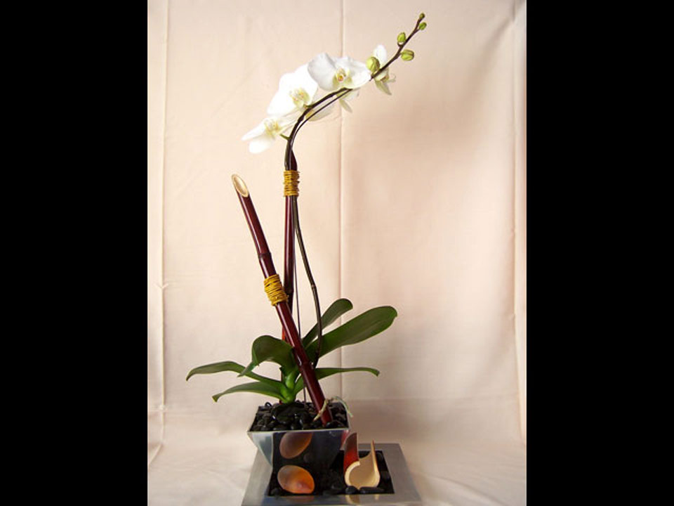 orchid-new2