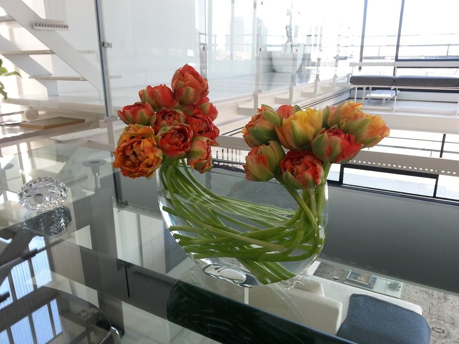 peony tulips 2
